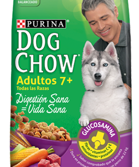 Dow-Chow-adultos-mayores