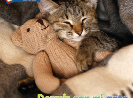 blog-dormir-con-mi-gato-